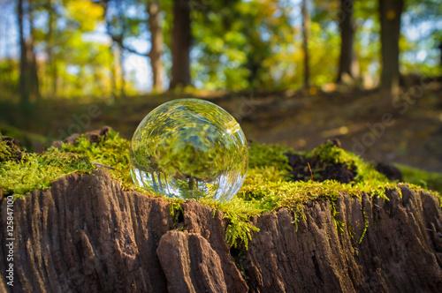 Fotografie, Obraz  Crystal Ball Nature