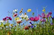 canvas print picture - Grußkarte - bunte Blumenwiese - Sommerblumen