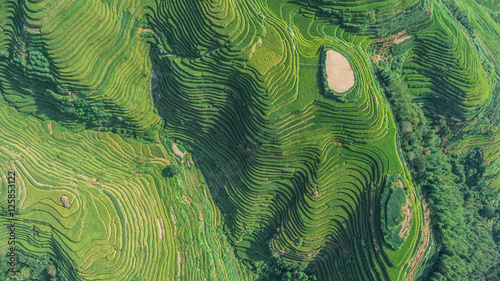 Slika na platnu Top view or aerial shot of fresh green and yellow rice fields