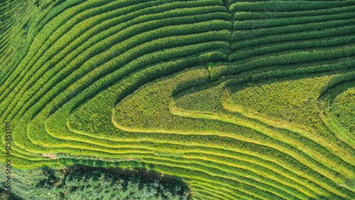 Poster Rijstvelden Top view or aerial shot of fresh green and yellow rice fields.Longsheng or Longji Rice Terrace in Ping An Village, Longsheng County, China.