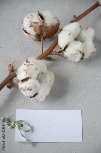 gift card on Valentine's Day with cotton flowers © galinka_do