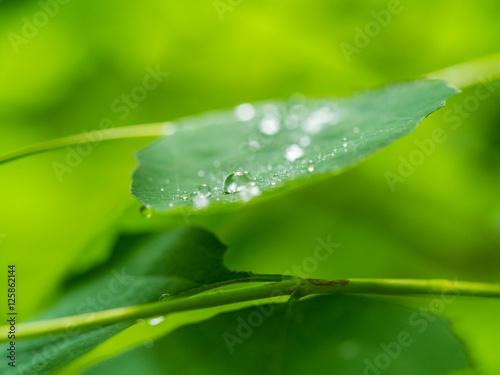 Fototapeten Natur drops on the leaf, macro photo