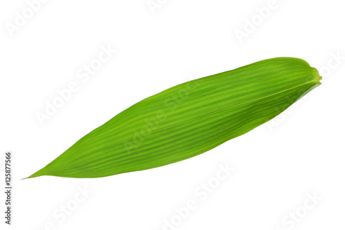 Single Isolated Bamboo leaf texture