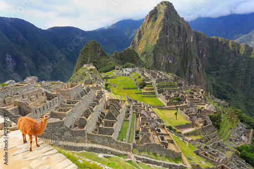 Photo  Llama standing at Machu Picchu overlook in Peru