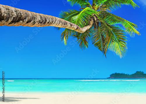 Fotografie, Obraz  Perfect white sandy palm beach Baie Lazare, Mahe island, Seychelles