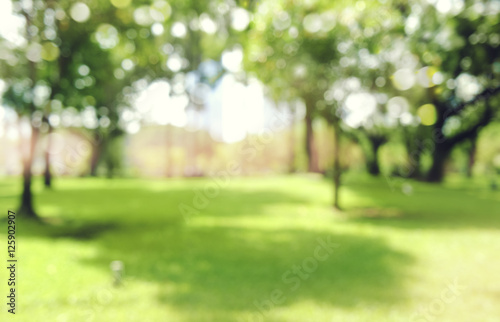 Poster Jardin defocused bokeh background of garden trees in sunny day