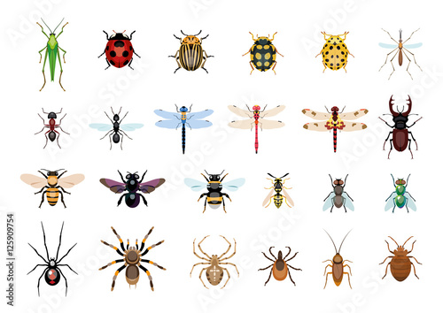 Carta da parati Vector,drawing, insect, bug illustration