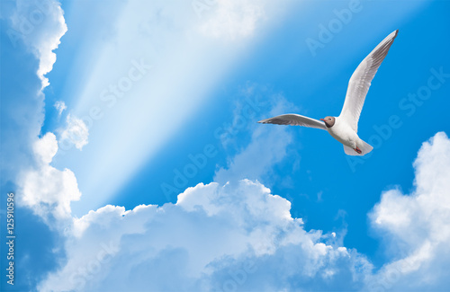 Canvas Print - seagull flying in the sun rays among the clouds