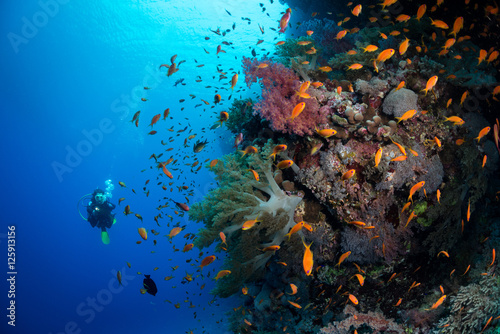Fotografie, Obraz  Diving the wall, Red Sea, Egypt