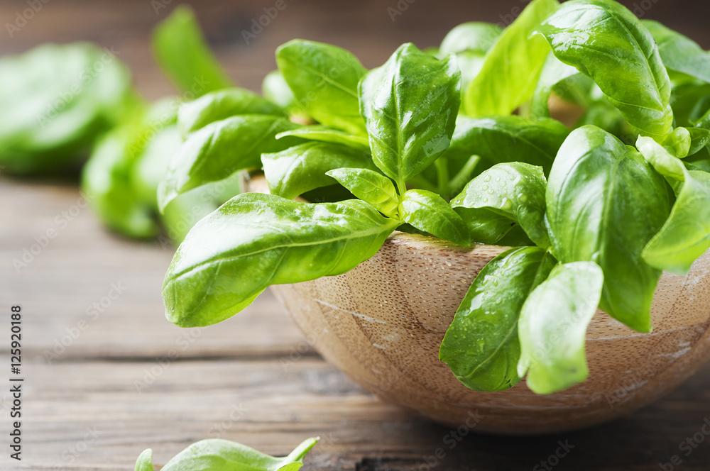 Fototapety, obrazy: Fresh green basil on the table