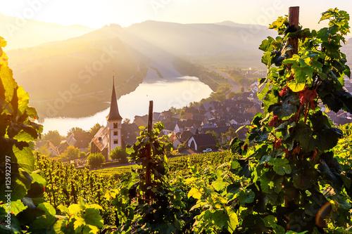 Garden Poster Vineyard Sonnenaufgang bei der Moselschleife Bremm