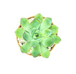Top view of small cactus pot isolated over white