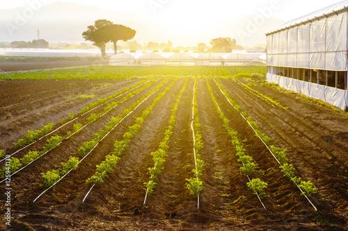 Photo agricoltura biologica in Italia