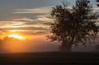 sunrise, fog, mornings, tree