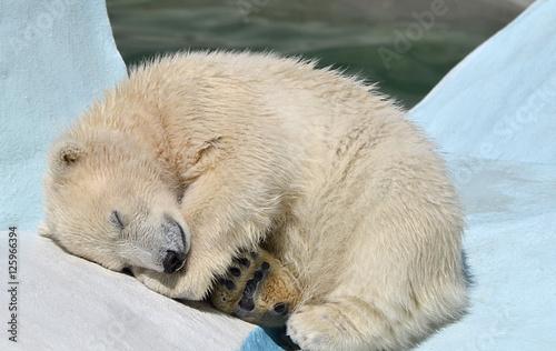 In de dag Ijsbeer Белый медвежонок спит.