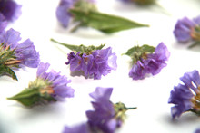 Dried Flowers, Blue Statice (detail Picture) Or Sea Lavender Ready To Use In A Diy Project.
