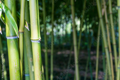 Acrylic Prints Bamboo Bamboo trunk in the woods