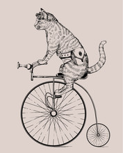 Steampunk Cat On Retro Bicycle...