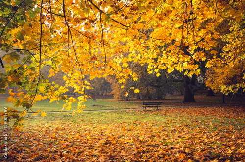 Poster Miel Colorful autumn park on sunny morning in Krakow, Poland