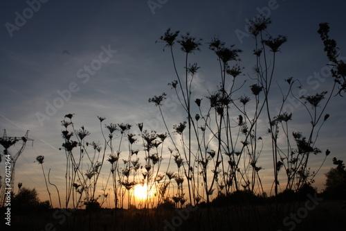 zachód słońca - 126012964