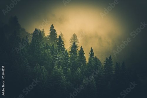 Wall Murals Forest Foggy Forest Landscape