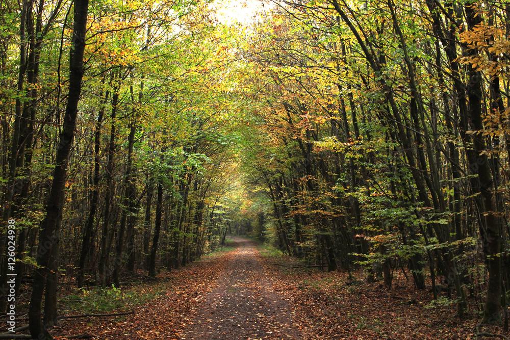 Valokuva  Herbst-Wald