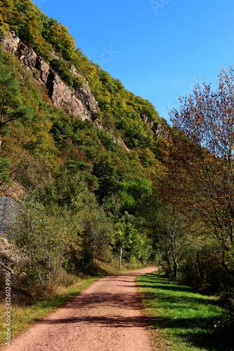 Herbst-Wald Canvas-taulu