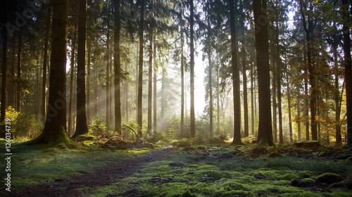 jesien-w-odenwaldzie