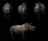 rhinoceros hiding in the dark