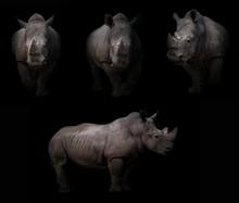 Rhinoceros Hiding In The Dark