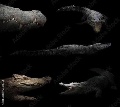 Poster Crocodile crocodile hiding in the dark