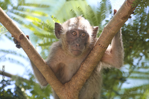 Photo  Monkey in the forest