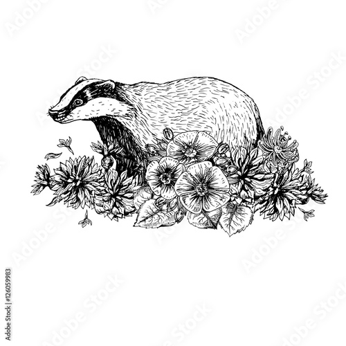 Fotografía Hand drawn badger with flowers