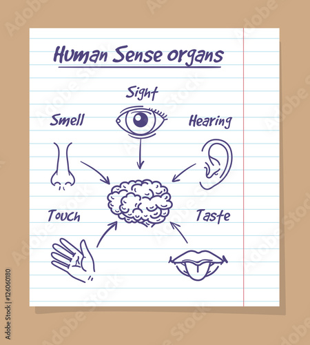 Five senses sketch human eye nose and ear smell and taste and human eye nose and ear smell and taste and touch ccuart Gallery
