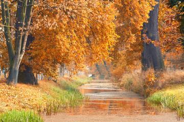 FototapetaKanal im Park mit bunten Herbstbäumen, Herbst im Sonnenlicht