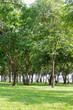 Public green park