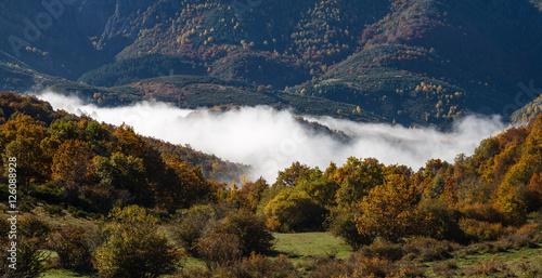 Bosques en otoño y niebla. Montañas de Riaño, León, España. © LFRabanedo