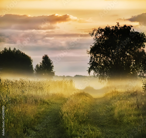 dirt road among meadows and trees in the morning mist Poster