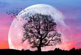 """Księżyc w tym największym zwany także super księżycem """"Elementy tego zdjęcia dostarczone przez NASA"""" - 126102798"""