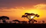 Fototapeta Sawanna - Typical african sunset with acacia trees in Masai Mara, Kenya