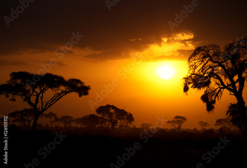 Poster Afrique du Sud Typical african sunset with acacia trees in Masai Mara, Kenya