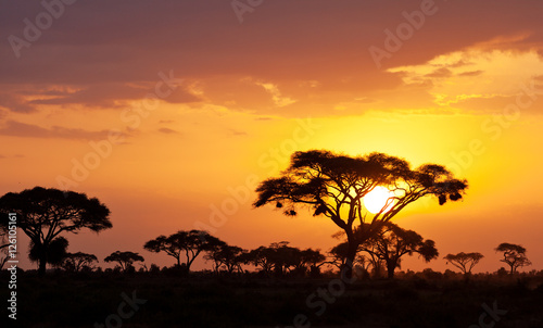 Obraz na plátně Typical african sunset with acacia trees in Masai Mara, Kenya