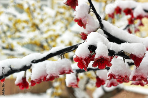 Fotografija  Flowers of artificial tree covered in snow. Christmas theme