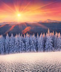 Panel Szklany Góry Frosty forest