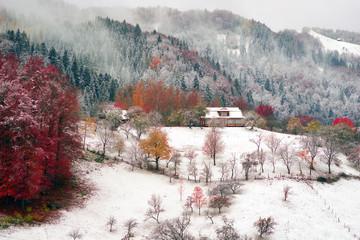 Fototapeta First snow fall in the Carpathian village