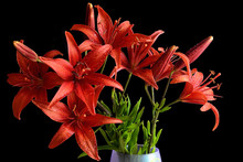 Bouquet Of Wet Red Lily Flowers
