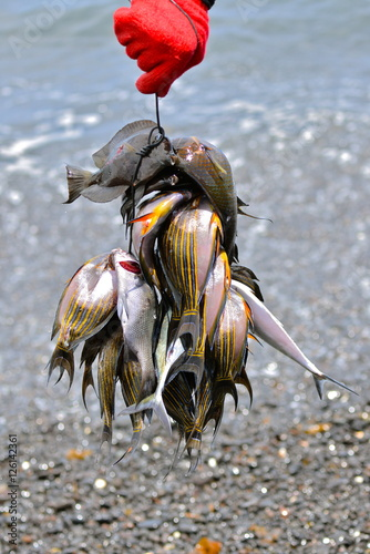 Foto auf AluDibond Drachen Harpoon fishing in Polynesia, colorful fishes