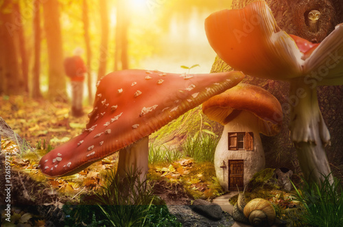 Fotografie, Tablou  mushroom fairy house