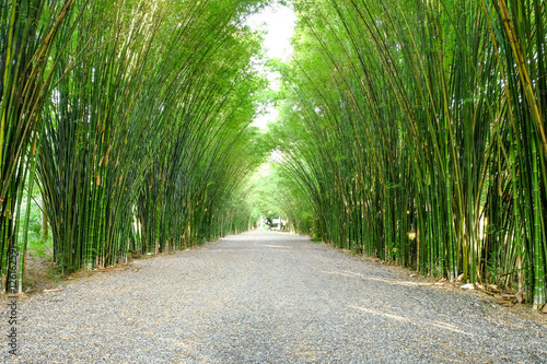 arbor-bamboo-forest-that-occurs-naturally-in-chulabhorn-wanaram-temple-nakhon-nayok-province-and-the-length-of-several-meters