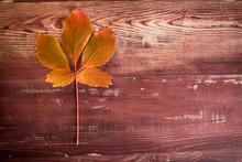 Une Feuille Morte Au Couleurs D'automne Sur Une Planche De Bois